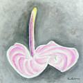 Pink Anthurium by Ben Gertsberg