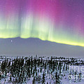 Pink Aurora Over Boreal Forest by Alan Dyer