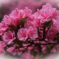 Pink Azalea by Randy Walton