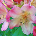 Pink Azalea by Dee Flouton