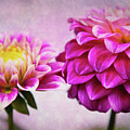 Pink Beauties by Amy Jackson