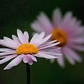 Pink Beauty by Georgiana Romanovna