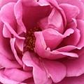 Pink Beauty  by Wonju Hulse
