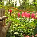 Pink Bleeding Hearts by Lisa Jayne Konopka
