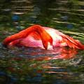 Pink Bliss by Scott Mullin
