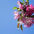 Pink Bloom by Olga Olay
