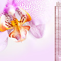 Pink Blotchy Orchid Calendar 2016 by Arletta Cwalina