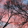 Pink Blue Sky by Julie Kindt