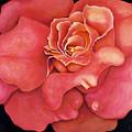 Pink Blush by Jordana Sands