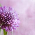 Pink Bokeh by Rebecca Cozart