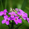 Pink Bouquet  by David Heilman