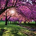 Pink Canopy by Eduard Moldoveanu