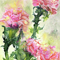 Pink Carnations by Sherry Shipley