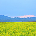 Pink Cloud Over The Mustard Fields by Tom Reynen