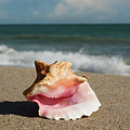 Pink Conch  by Zina Stromberg