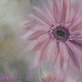 Pink Daisies by Donna Tuten
