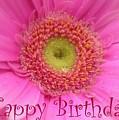 Pink Daisy Birthday Card by Carol Groenen