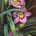 Pink Daylilys by Susan Jump