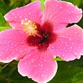 Pink Droplets by Diane Greco-Lesser