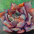 Pink Echeveria by Athena Mantle