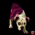 Pink English Bulldog Dog Art - 1368 - Bb by James Ahn