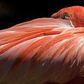 Pink Flamingo by Angela Creekmur