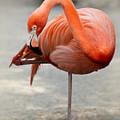 Pink Flamingo Balancing  by Sabrina L Ryan
