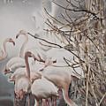 Pink Flamingo by Lana Haivor