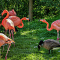 Pink Flamingos And Imposters by Steve Harrington