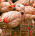Pink Flamingos by Kathleen K Parker