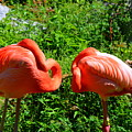 Pink Flamingos by Lisa Wooten