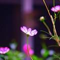 Pink Flower by Aline Kala