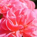 Pink Flower by Ana Maria Edulescu