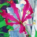 Pink Flower by Donna Bentley