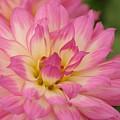Pink Flower by Dot Lestar