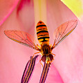 Pink Flower Fly by ABeautifulSky Photography by Bill Caldwell