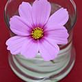Pink Flower by Frank Tschakert