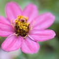 Pink Flower by Jessica Wakefield