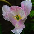 Pink Flower by Kevin Gobelman