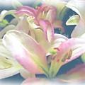Pink Flower by Ralph Liebstein