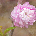 Dwarf Flowering Almond Romantic Floral by Betty Denise