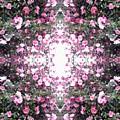 Pink Flower Sky Window by Julia Woodman
