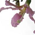 Pink Flower by Vladi Alon