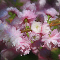 Pink Flowering Almond by Donna Kennedy