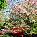 Pink Flowering Dogwood by Susan Savad