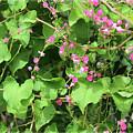 Pink Flowering Vine1 by Megan Dirsa-DuBois