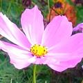 Pink Flowers by Debra Lynch
