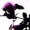 Pink Flowers In Empty Space by Debra Lynch
