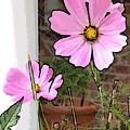 Pink Flowers Of Summer by Deb Schneider