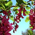 Pink Flowers Virginia City Nv by LeeAnn McLaneGoetz McLaneGoetzStudioLLCcom